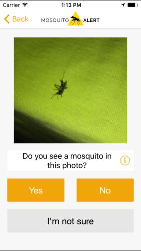 Mosquito alert 2